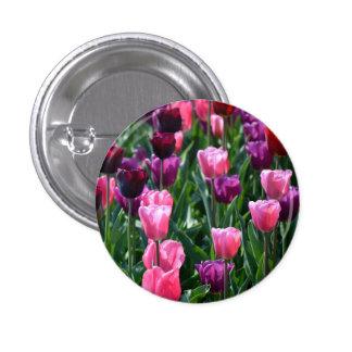 Botón de los tulipanes/insignia rosados y púrpuras