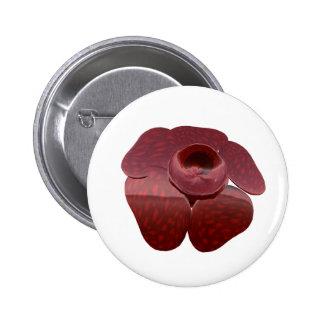 Botón de Rafflesia