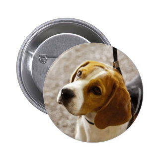 Botón del beagle