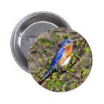 Botón del este del Bluebird Pin