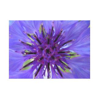 Botón púrpura azulado del soltero lona estirada galerias