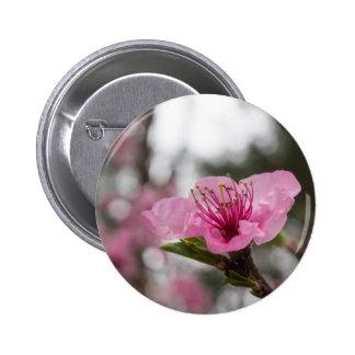 Botón redondo de la flor de cerezo de la montaña