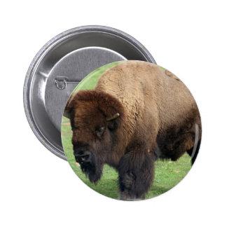 Botón redondo del bisonte norteamericano