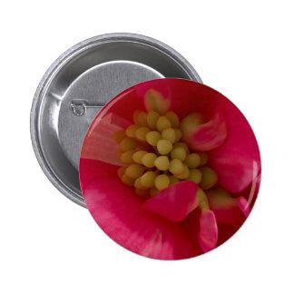 Botón rosado de la macro del estambre de la