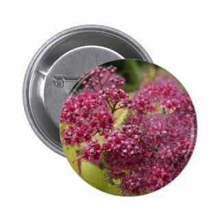 Botón rosado del Pin de Spirea