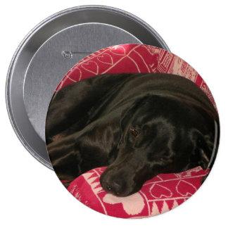 Botón soñoliento del perro