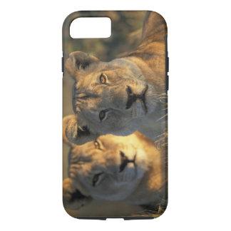 Botswana, parque nacional de Chobe, leonas Funda iPhone 7