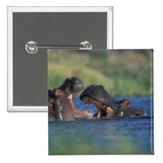 Botswana, reserva del juego de Moremi, Hippopotami Pins