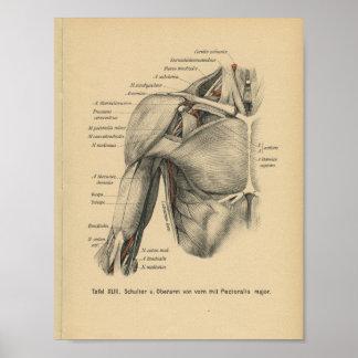 Brazo del hombro de la impresión de la anatomía