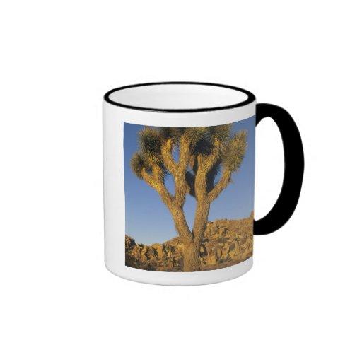 Brevifolia de la yuca, de la yuca), y granito taza de café