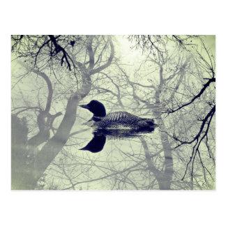 Bribón blanco y negro en una postal del lago