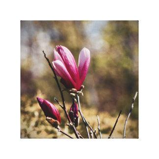 Brote de la magnolia - arte de la lona - flor