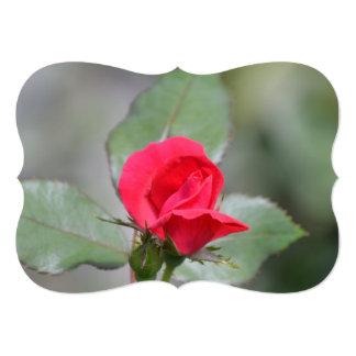 Brote magnífico del rosa rojo invitación 12,7 x 17,8 cm