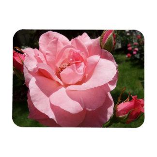 """Brotes color de rosa y de flor rosados 3"""""""" imán x4"""