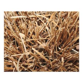 Brown desecó la planta folleto 11,4 x 14,2 cm