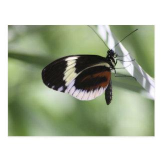 Brown negro y postal blanca de la mariposa