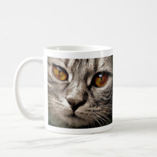 Brown observó el gato gris taza de café