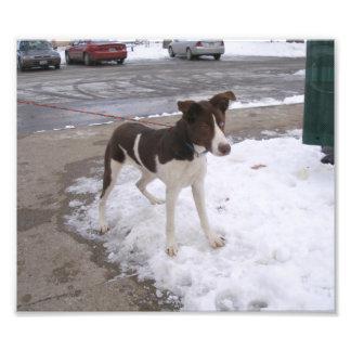 Brown y perro blanco con un ojo azul foto