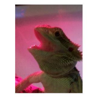 Bubba el dragón barbudo postal