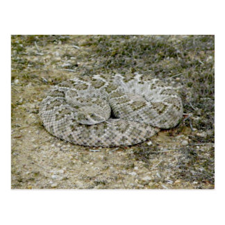 Buenas noches Sr. Rattlesnake de Sssssnake… que es Tarjetas Postales