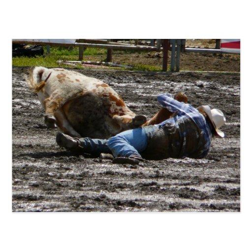 Buey del vaquero del rodeo que lucha postales