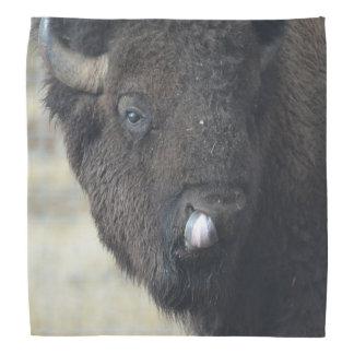 Búfalo divertido bandana