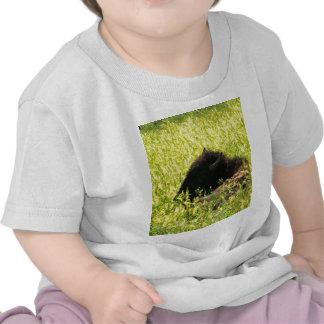 Búfalo en descanso camisetas