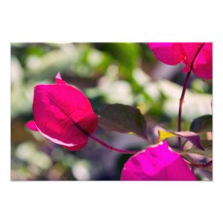 Bugambilia bajo el sol | Foto impresión