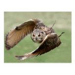 Búho de Eagle en vuelo Tarjetas Postales