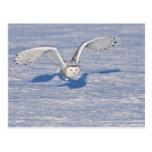 Búho Nevado en vuelo. Postal