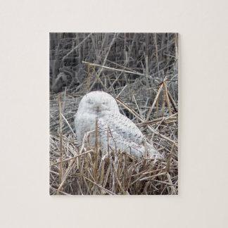 búho nevoso puzzle