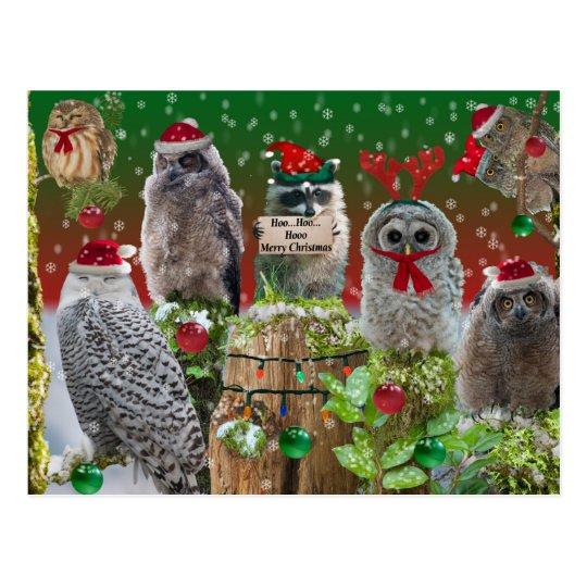 Búhos y mapache de los Critters del navidad Postal