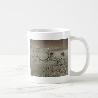 Buitres en la parte superior del árbol de taza de café