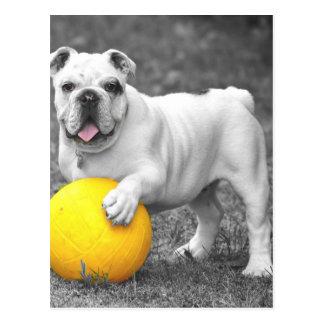 Bull en blanco y negro con la bola amarilla postal