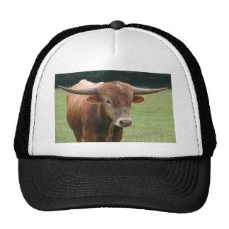 Bull en el campo gorras