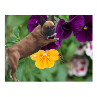 Bulldog francés tarjeta postal