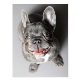 Bulldog francés postal