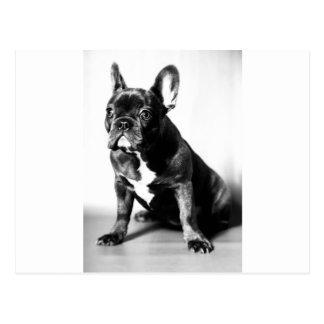 Bulldog francés postales
