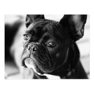 Bulldog francesas postales