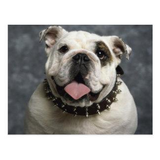 Bulldog inglesas postal