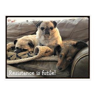 Bumblesnot: La resistencia es postal vana