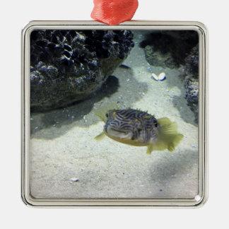 Burrfish rayado adorno navideño cuadrado de metal