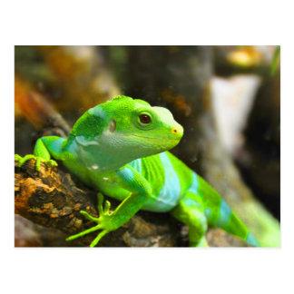 Busque el reptil del lagarto de la iguana del amor postal