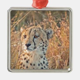 Búsquedas surafricanas del guepardo para la comida adorno cuadrado plateado