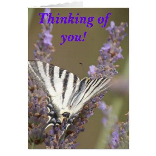 ¡butterflies3 (1), pensando en usted! felicitacion