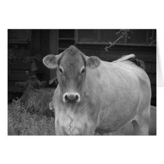 bw_cow tarjeta de felicitación