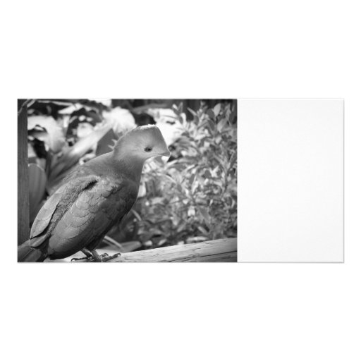 bw dado vuelta cabeza beaked cortocircuito del páj tarjeta fotográfica personalizada