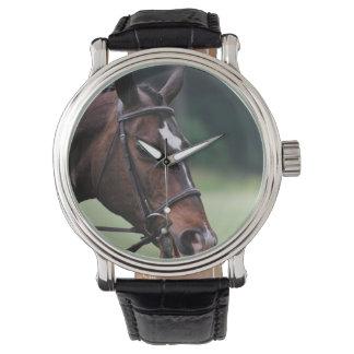 Caballo árabe con blanco en cara reloj