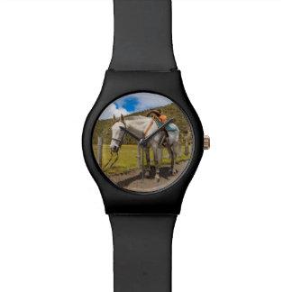 Caballo blanco implicado en el parque nacional de reloj de pulsera