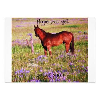 caballo cuarto comunicados